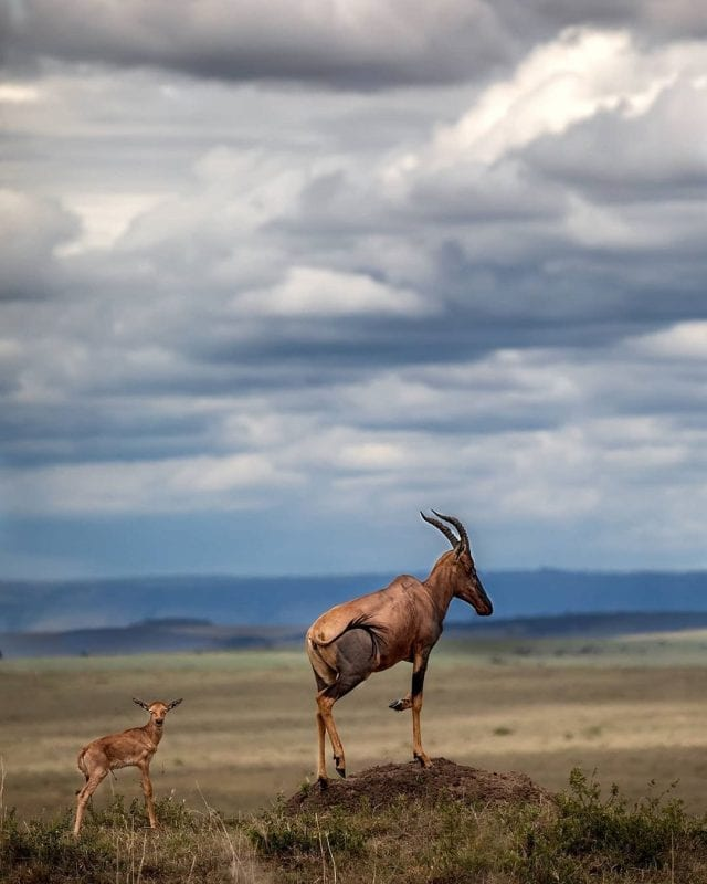 10 Best Wildlife Photos to Celebrate Mothers Day