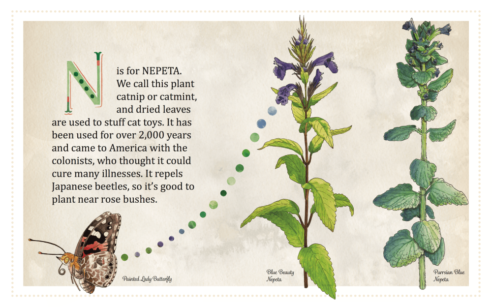 N is for Nepeta