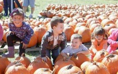It's Harvest Season in Central Jersey!