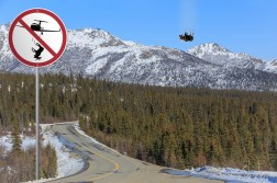 Don't drop a moose from a plane. Helicopter okay.