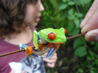 child holding tree frog in costa rica