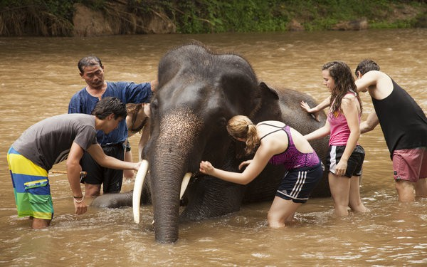 volunteer vacation with elephants