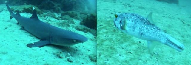 Costa RIca Scuba Diving off Caño Island