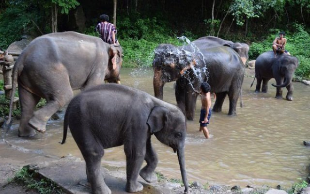 Things to do in Thailand - Elephant Conservation