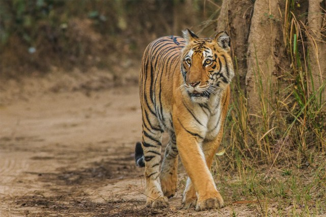 Top 10 National Parks in the World- Jim Corbett National Park
