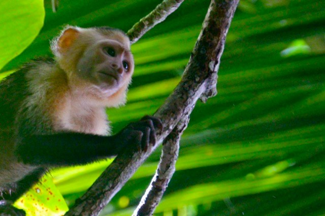 Top 10 National Parks- Corcovado National Park, Costa Rica