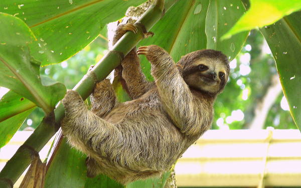 Things to Do in Costa Rica- Wildlife Rescue