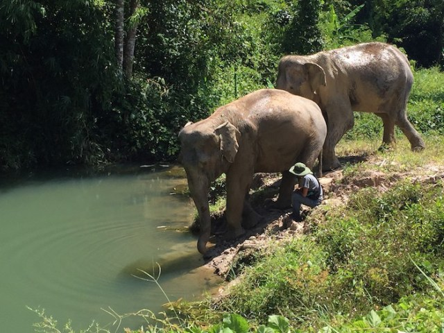 Spotlight: Elephants and Islands in Thailand