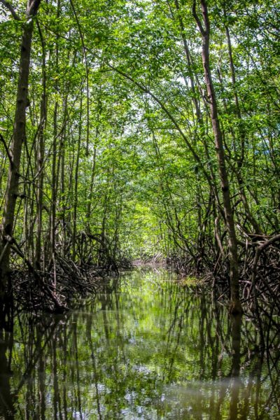 Jungle Love: What Are Rainforests Important?