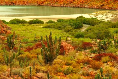 Ensenada Grande, Espiritu Santo an island off the coast of La Paz