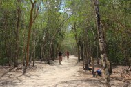 a jungle canopy covers coba's roads which were built over a 1000 years ago. here 2 visitors are exploring the ruins on rented bikes