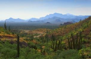 a mountainous shrubland environment with desert ecosystem in baja california sur