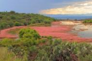 a wetland ecosystem in the mountainous shrubland environment of San Miguel de Allende