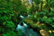 The Cupatitzio River and flora found in the National Park of Uruapan