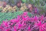 native garden flora