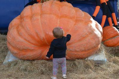 Giant pumpkin at the pumpkin patch