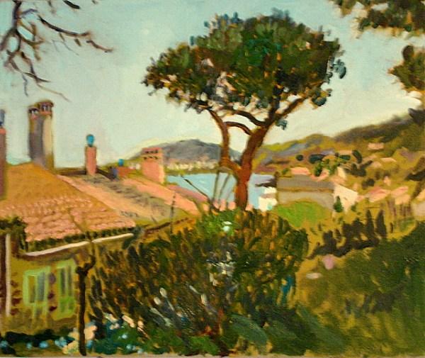 Collioure, Tree