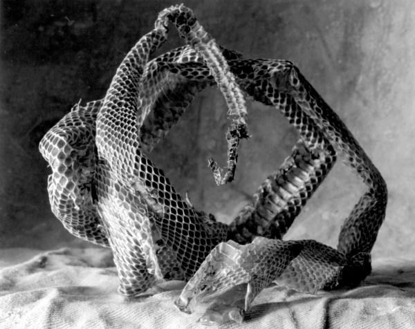 Snake skin, Piermont, New York