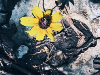 Processed with VSCO with a2 preset