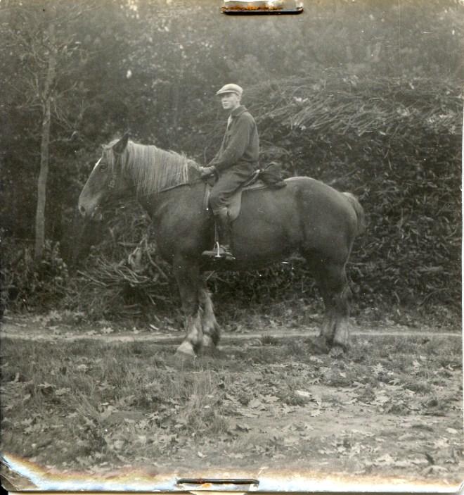 draft horse 5