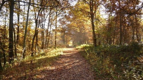 A forest trail near Outrelouxhe, Belgium