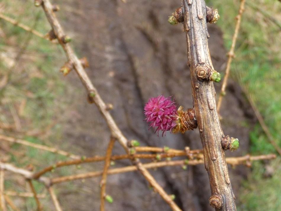 GR571-tree
