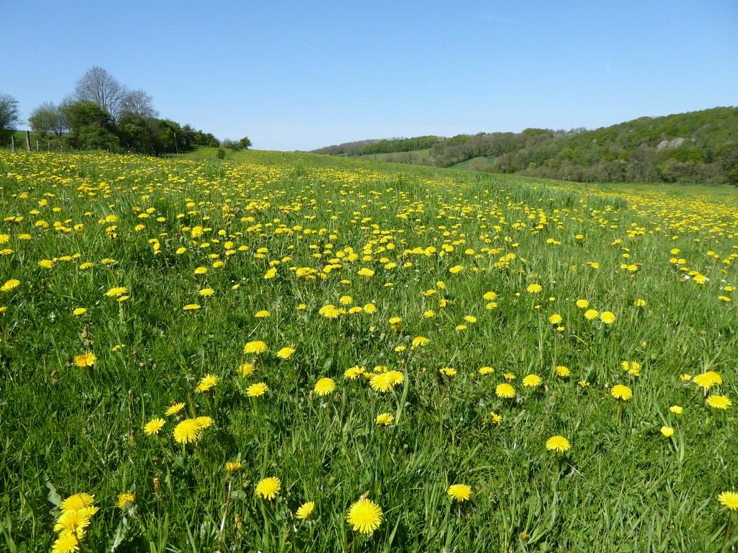 Voerstreek-meadows
