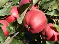 Haspengouw fruit region