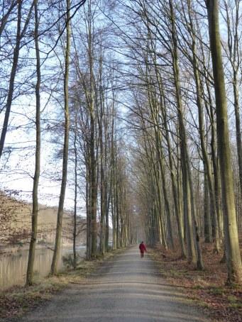 Tervuren Park beeches