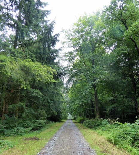 Forest walk near Chimay