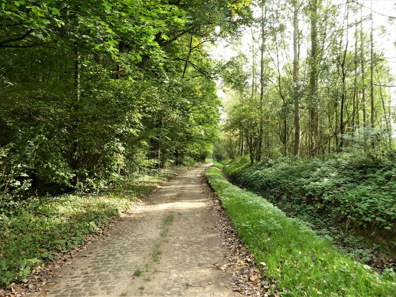 Wooded lane near Overijse