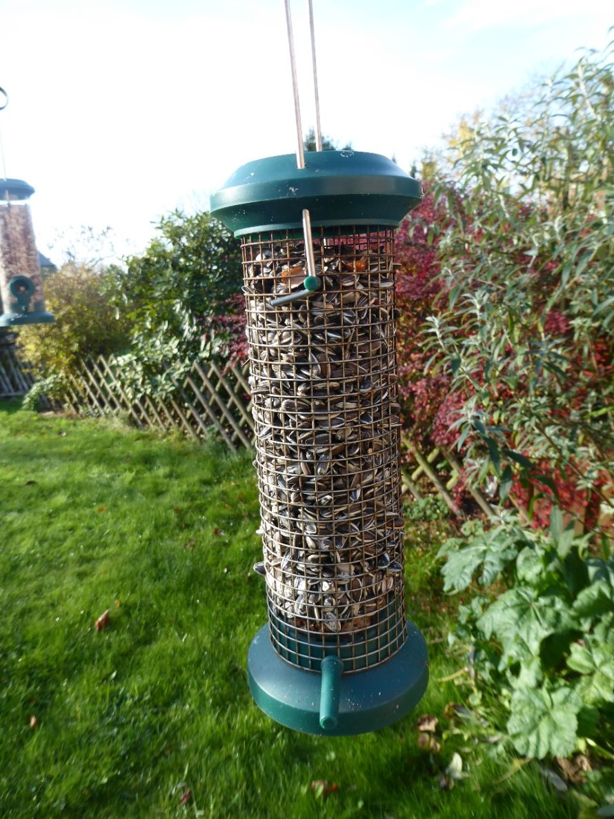 Garden birds (33)_1280x960