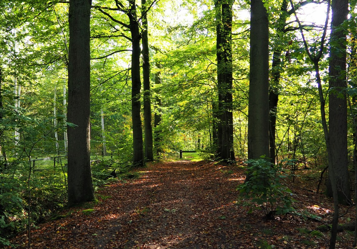 the woods of Sint-Pieters-Rode