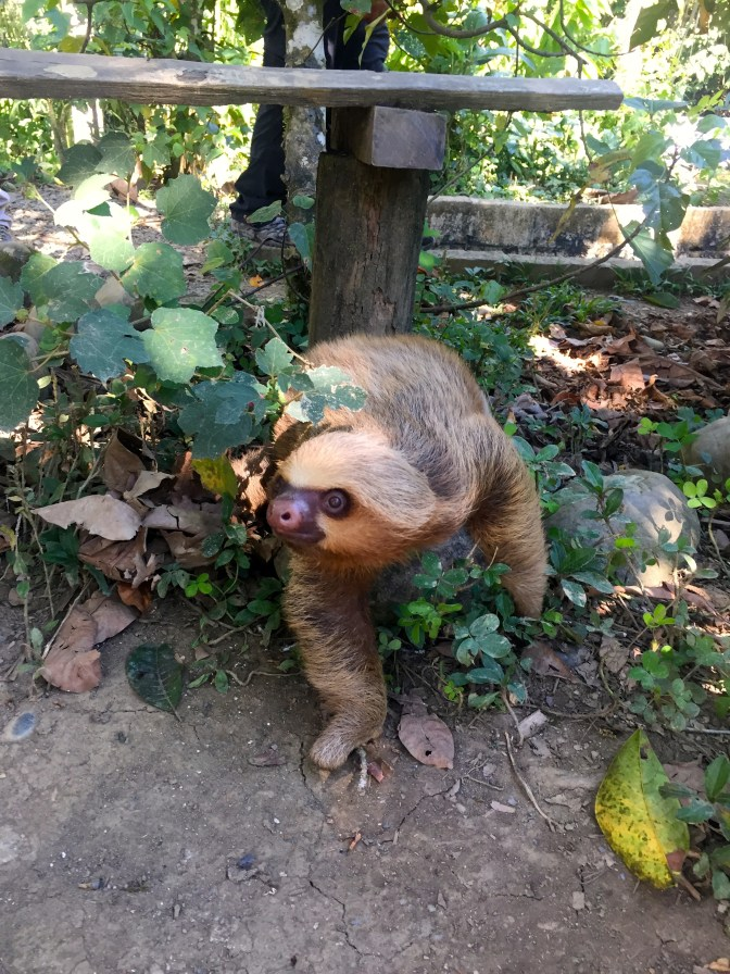 This sloth was so cute- his movements didn't seem real