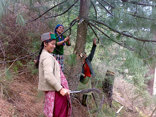 Illegal felling of trees