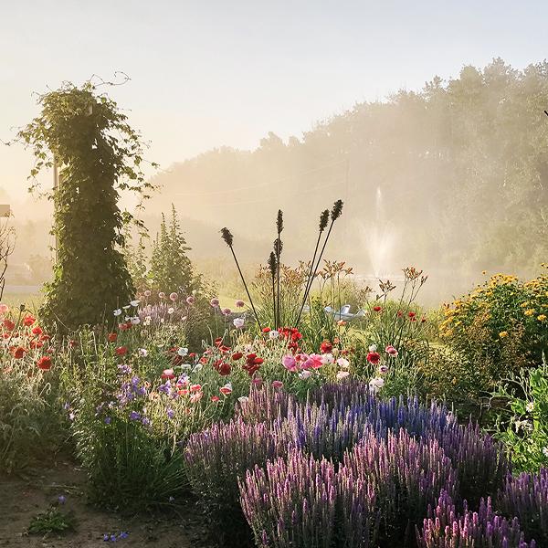 Flower Gardens at Farm Fresh Florals