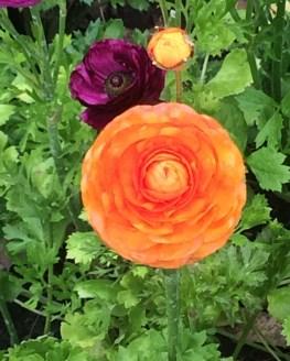 flower 5 (2)