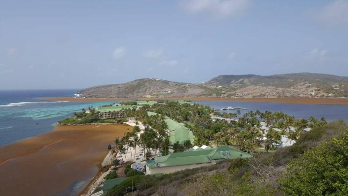 Pointe FM Photo of sargussum on the Eastern cost of Antigua.