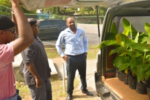 men look at plantain slips in the back of a van