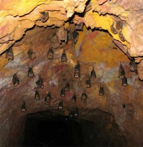 Fruit bats resting inside a cave by D. J. Martins