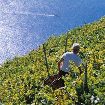 Typical vineyard in the Cinque Terre, Liguria