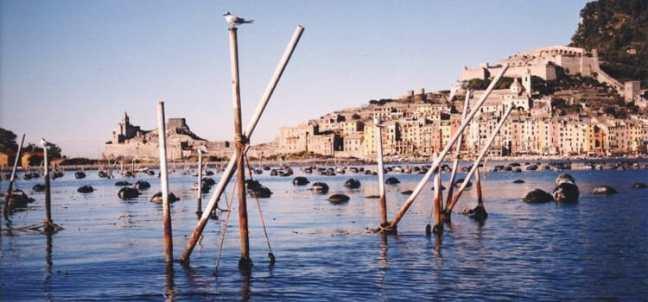 Mussel aquaculture in the waters of Portovenere , Gulf of La Spezia, Liguria