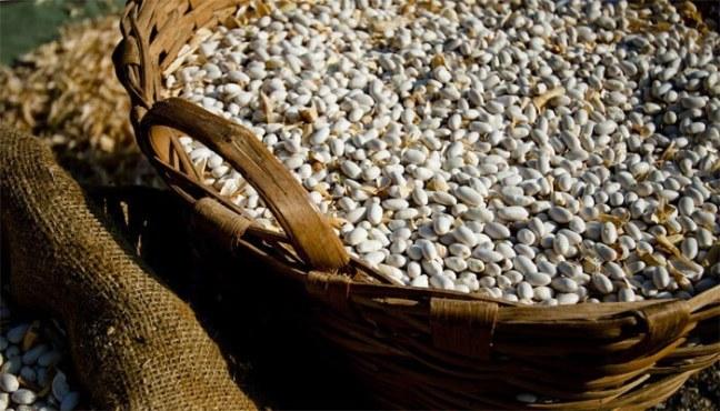 Fagiolana white beans: typical food in Liguria
