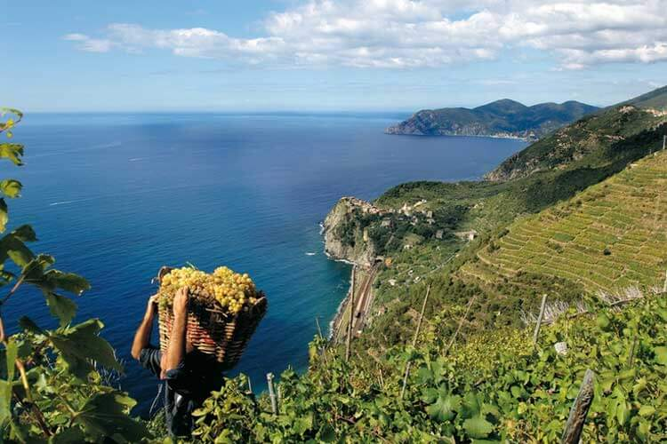 Grape Harvest Cinque Terre Portovenere - photo from turismoinliguria.it