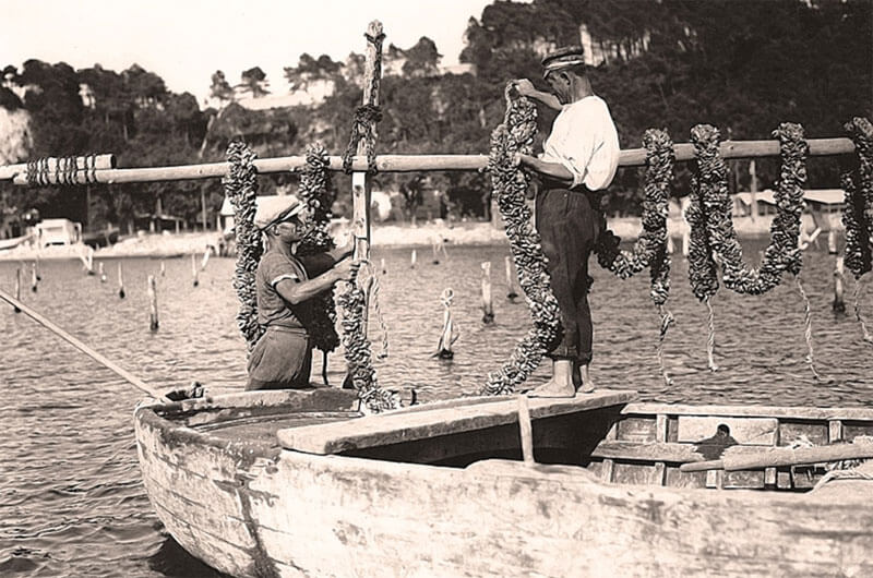 Historic mussel farming in Liguria
