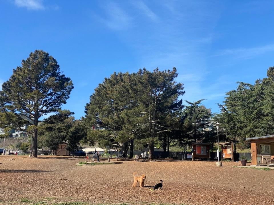 Sausalito Parks - Remington Dog Park