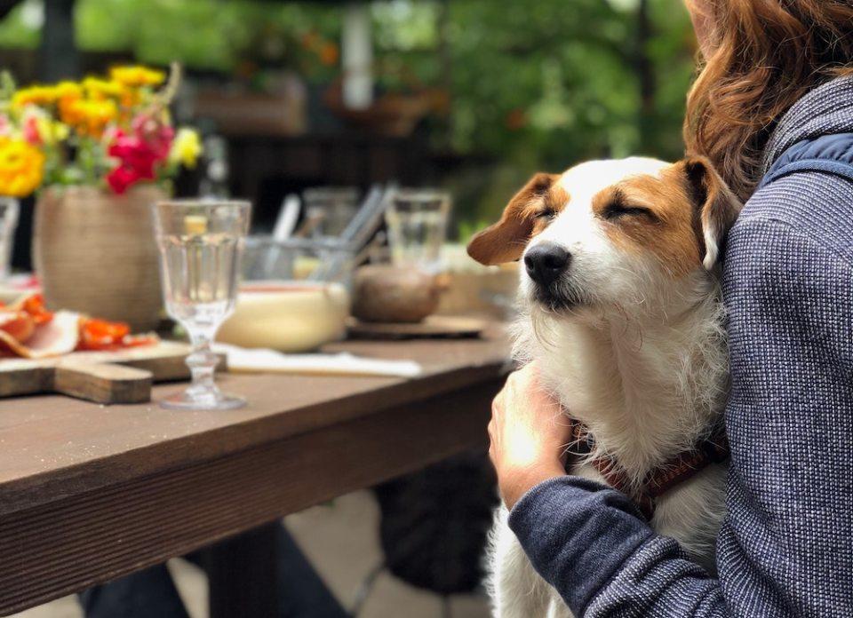 Dog-Friendly Sausalito Guide - Restaurants