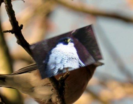 Shorts – Scottish Borders Birds