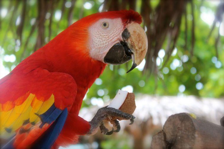 Tortuga Island Montezuma Costa Rica - 062