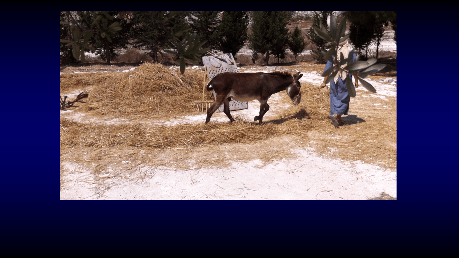 WTB-58 - From Gethsemane To Calvary - Pictures From The Land Of The Book (7)
